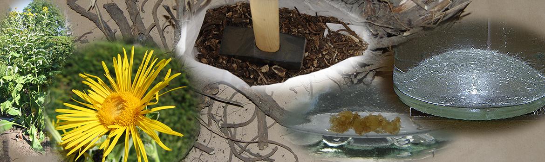 Prepare the iluna root to distill essential oils